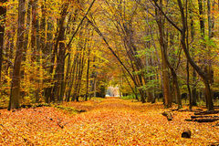 Colorful autumn park Stock Images