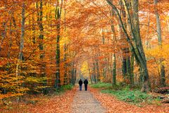 Colorful autumn park. Alley in the colorful autumn park Stock Image