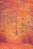 Colorful autumn in park. Royalty Free Stock Photo