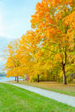 Colorful autumn park Royalty Free Stock Images