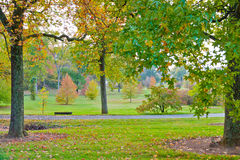 Colorful autumn in park Stock Image