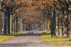 Colorful autumn park scenery with ducks Royalty Free Stock Photography