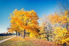 Colorful autumn park Royalty Free Stock Photos