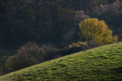 Colorful autumn pasture and forests Royalty Free Stock Photos