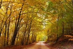 Colorful autumn path. A colorful autumn path in the mountain royalty free stock photo