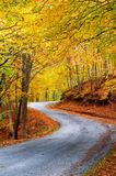 Colorful autumn path. A colorful autumn path in the mountain Paggaion in Greece stock image