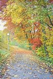 Colorful autumn path. Color falls in autumn path in the forest Royalty Free Stock Image