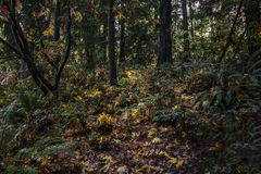 Colorful Autumn Path Stock Image