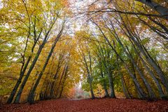 Colorful autumn path Stock Photos
