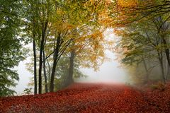 Colorful autumn path. Vibrant colors of autumn have paint this picturesque forest scenery royalty free stock images