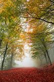Colorful autumn path. Vibrant colors of autumn have paint this picturesque forest scenery stock photography