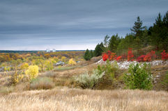 Colorful autumn in pine forest Stock Photo