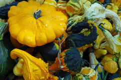 Colorful autumn pumkins and gourds Royalty Free Stock Photography