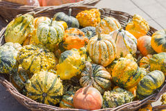 Colorful autumn pumpkins Royalty Free Stock Photo