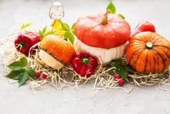 Colorful autumn pumpkins stock image