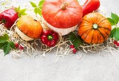 Colorful autumn pumpkins stock photos