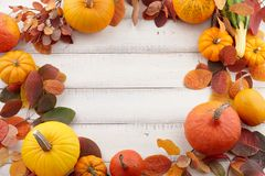 Colorful autumn pumpkins and leaves festive background Stock Images