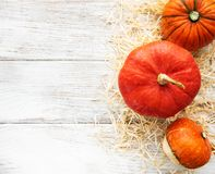 Colorful autumn pumpkins royalty free stock images