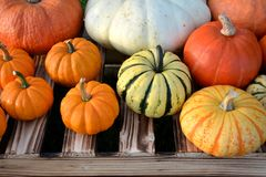 Colorful autumn pumpkins and squashes Royalty Free Stock Photos