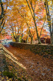 Colorful autumn, red, orange and gold leaf Stock Photos