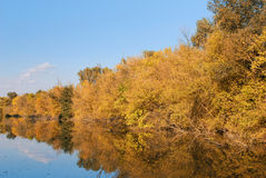 Colorful autumn river Stock Photos