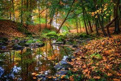 Colorful autumn. River in the autumn park and scattered yellow leaves Royalty Free Stock Photos