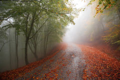 Colorful autumn road Royalty Free Stock Images