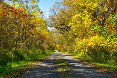 Colorful Autumn Road Stock Photography