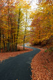 Colorful autumn road Stock Photos