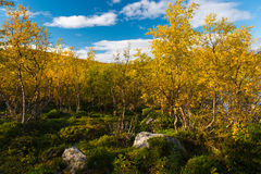 Colorful Autumn in Scandinavia Stock Photo