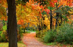 Colorful Autumn Scene Royalty Free Stock Photography