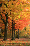 Colorful Autumn Scene Stock Photos