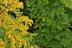 Colorful Autumn Scene Beech Trees. Colorful Autumn scene with yellow and green leaves of Beech trees. Photographed from top to the bottom royalty free stock photography