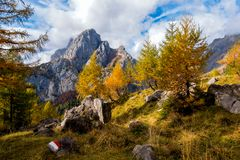 Colorful autumn scene on mountain. Sky with clouds,colorful trees and mountain peak. Colorful autumn scene on mountain. Sky with clouds, colorful trees and stock images
