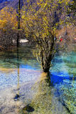 The colorful autumn scenery of Huanglong national park Stock Image