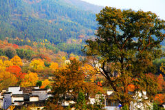 Colorful Autumn scenery in Tachuan Stock Images