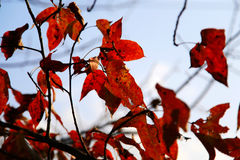 Colorful Autumn scenery in Tachuan Stock Photos
