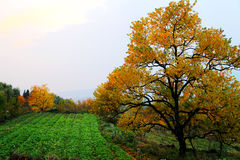 Colorful Autumn scenery in Tachuan Stock Photo
