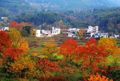 Colorful Autumn scenery in Tachuan. Is one of four famous Autumn scenery in China , located in Tachuan village , Huangshan city, Anhui , China Royalty Free Stock Images