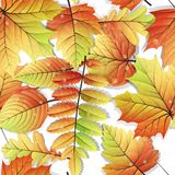 Colorful autumn seamless leaves isolated. EPS 10 Stock Image