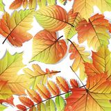 Colorful autumn seamless leaves isolated. EPS 10 Stock Photo