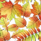 Colorful autumn seamless leaves isolated. EPS 10 Stock Photos