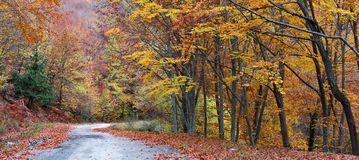 Forest during autumn Royalty Free Stock Photos