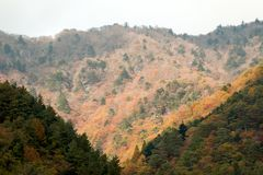 Colorful of Autumn season by the leaf color change of many tree in the mountain royalty free stock photos