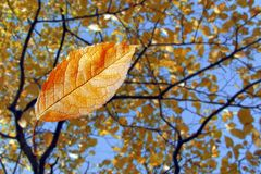 Colorful autumn sheet with tree. Colorful autumn sheet on background tree stock images