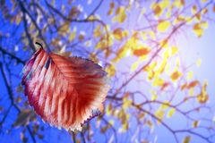 Colorful autumn sheet with tree. Colorful autumn sheet on background tree royalty free stock image
