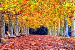 Colorful Autumn at Shinjuku Park royalty free stock photo