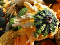 Colorful Autumn Squash and Gourds Stock Photo