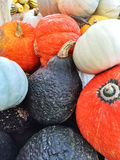 Colorful autumn squashes Royalty Free Stock Photography