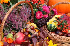 Colorful autumn stuff Stock Image